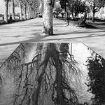 Reflexos  Num Visor de Vidro