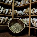 Pão de S. Sebastião