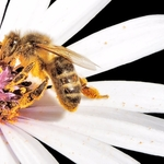 A abelha e a flor