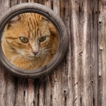 Aqui há gato