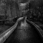 Serpente de água_