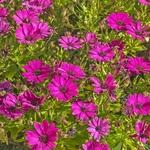 Primavera no meu jardim
