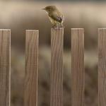 The little bird___