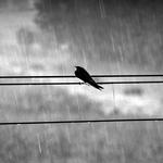 Under the rain___