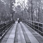 A ponte e o Amor