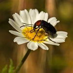O insecto