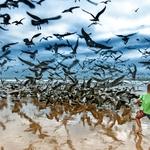O menino contra as gaivotas