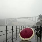 The umbrella___