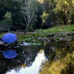 The blue umbrella...