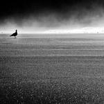 A pequena grande gaivota das ilhas de bruma .
