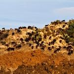 As cabrinhas da Serra