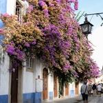 Cores e flores em Óbidos