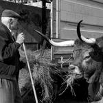 Feira do gado