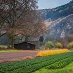 Herbst ländlichen Miltenberg