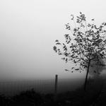 Manhã submersa de Outono nas ilhas de bruma .