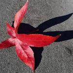Folha caída