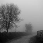 Dia de nevoeiro