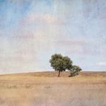 Solitary tree_________