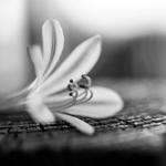 Uma pequena flor