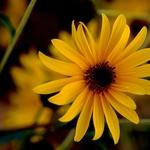Flor de Outono
