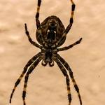 Aranha no meu jardim