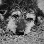 A história do cãozinho .