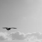 A gaivota cósmica a caminho da LUZ de DEUS .