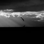 As gaivotas cósmicas na LUZ da PAZ .