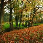O belo do Outono...