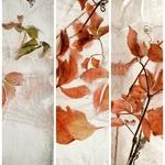 3 dimensions de l'automne
