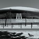 Os pombos vão ao concerto dos U2...