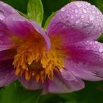 A  flor que vos dou