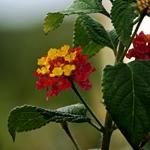 Perfumadas cores da natureza