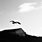 The free bird walking in the sky .