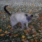 CAT SUSPICIOUS