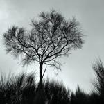 A árvore...