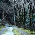 Caminhos de Kyoto