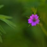 Ponto lilás