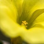 yellow___