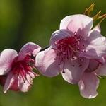 Cheirinho a primavera