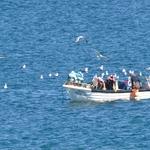 Pesca e gaivotas