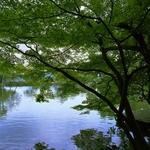 Parque Kenrokuen - A lagoa