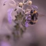 a abelha e o mel