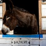 O Baltazar
