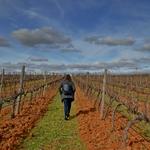 Caminhando nas vinhas...