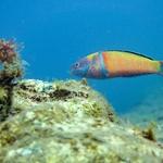 Colorido submerso