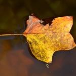 Autumn___