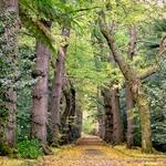 Na Floresta Encantada