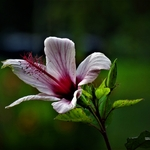 Uma Flor.