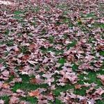 Outono.